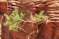 Plant stones Stock Photo