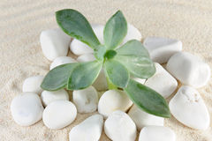 Plant on stones and sands Royalty Free Stock Photos