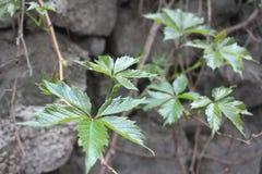 Plant on stones royalty free stock photo