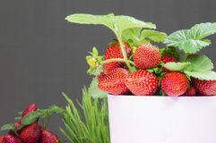 Plant with strawberries Stock Images