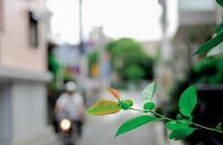 Plant on the street is taken around Tokyo, Japan. It was pictured in the summer season. There is still a good nature in Tokyo. Plant on the street is taken stock images