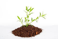 Plant in the studio concept Stock Photography
