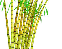 Plant of sugar cane. Illustration on a white background Royalty Free Stock Images