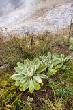 Plant at sunbeam hotsprings. Stock Image