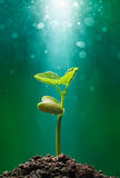 Plant with sunbeam. Sprout with sunbeam shining on it Royalty Free Stock Image