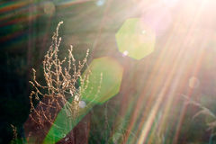 Plant in sunlight beam Stock Photo