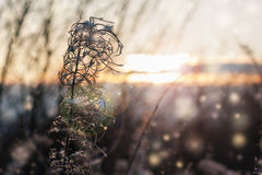 Plant on a sunny day in December. Royalty Free Stock Photo