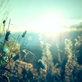 Plant on a sunny day in December. Stock Photography