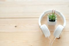The plant t with the headphones on the table.