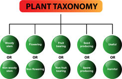 Plant taxonomy diagram - vector. Clear diagram of the plant taxonomy. Great for school, students, teachers, presentations and learning materials. Also in vector Royalty Free Stock Photography