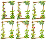 Plant templates. Illustration of many plant templates Stock Image