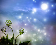 Plant tendrils on night fantasy background Royalty Free Stock Images