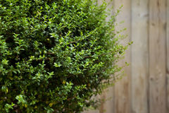 Plant on a terrace Stock Photography