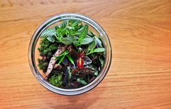 Plant terrarium in the glass jar royalty free stock photography
