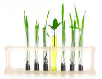 Plant in a test tube Royalty Free Stock Image
