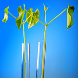 Plant in test tube Stock Images