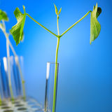 Plant in test tube Stock Photo