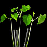 Plant in test tube Royalty Free Stock Photography