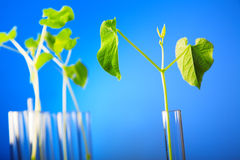 Plant in test tube Royalty Free Stock Photo