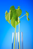 Plant in test tube Royalty Free Stock Image