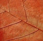 Plant texture Stock Image