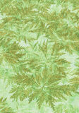 Plant Texture Background Royalty Free Stock Images