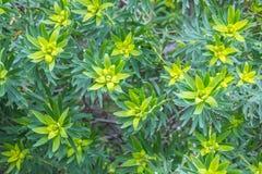 Plant texture background, jardin botanico, Valencia, Spain Royalty Free Stock Photography