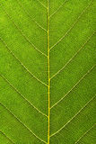 Plant texture Stock Images