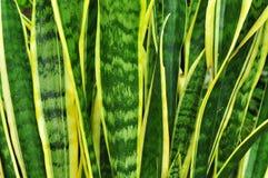 Plant texture royalty free stock photos