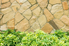 Plant texture of stone artificial wall Royalty Free Stock Photos
