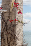 Plant with thorns and flowers on stone pillar Stock Image