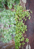 Plant On Timber wood Royalty Free Stock Images