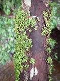Plant On Timber wood Royalty Free Stock Photo