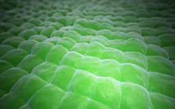 Plant tissue close-up Stock Photos
