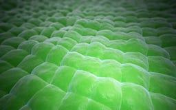 Plant tissue close-up Stock Photos