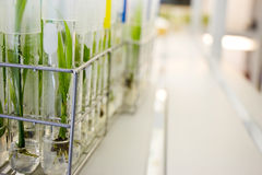 Plant tissue culture Stock Photography