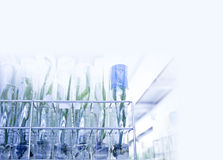 plant tissue culture Royalty Free Stock Photos
