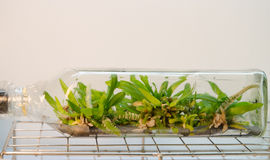 Plant tissue culture Stock Photo