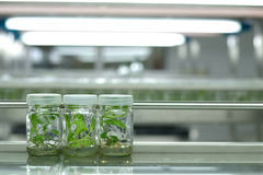 Plant tissue culture Stock Photos