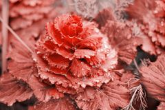 Plant toned in living coral. Close up plant toned in living coral stock image