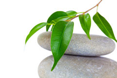 Plant on top of pebbles Stock Image