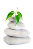 Plant on top of pebbles Royalty Free Stock Images