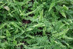 Plant top view. Group of plant top view Stock Photos
