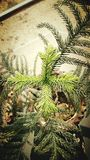 Plant top view. Plant growth beauty of nature Stock Photography