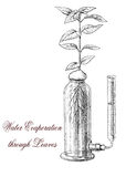 Plant transpiration, botanical vintage engraving Royalty Free Stock Image