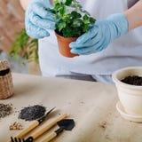 Plant transplantation home flora hand tool soil stock image
