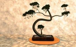 Plant, Tree, Bonsai, Houseplant stock photo