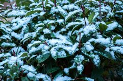 Plant tree covered with frost stock photography