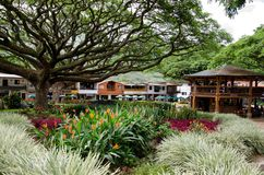 Plant, Tree, Garden, Grass royalty free stock photos