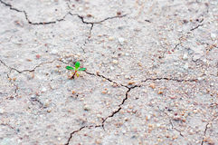 Plant Tree growing on broken earth Stock Photos